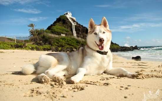 A Day At The Beach With Miss Peach