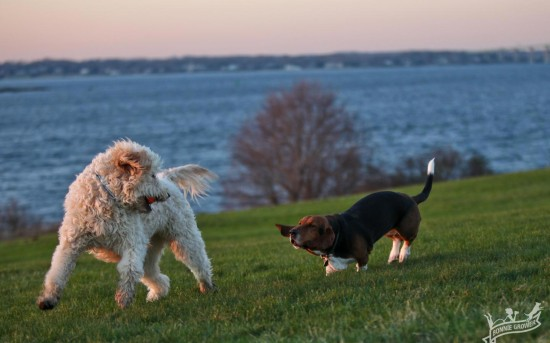 Lessons from the Dog Park