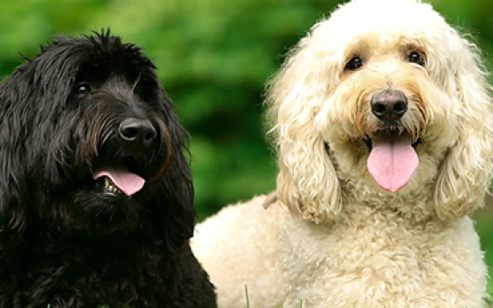 Dynamic Doodle Duo!