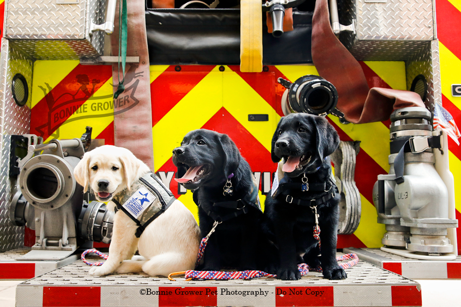 Warrior Canine Connection Honor Litter at Fire Station